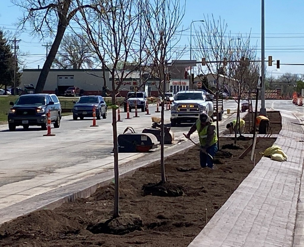 Planting Trees in Median on Omaha Street in Rapid City, South Dakota, Wednesday, May 12, 2021.